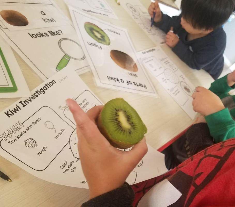 Anatomy of a Kiwi Fruit Science Investigation - Pre-K ...